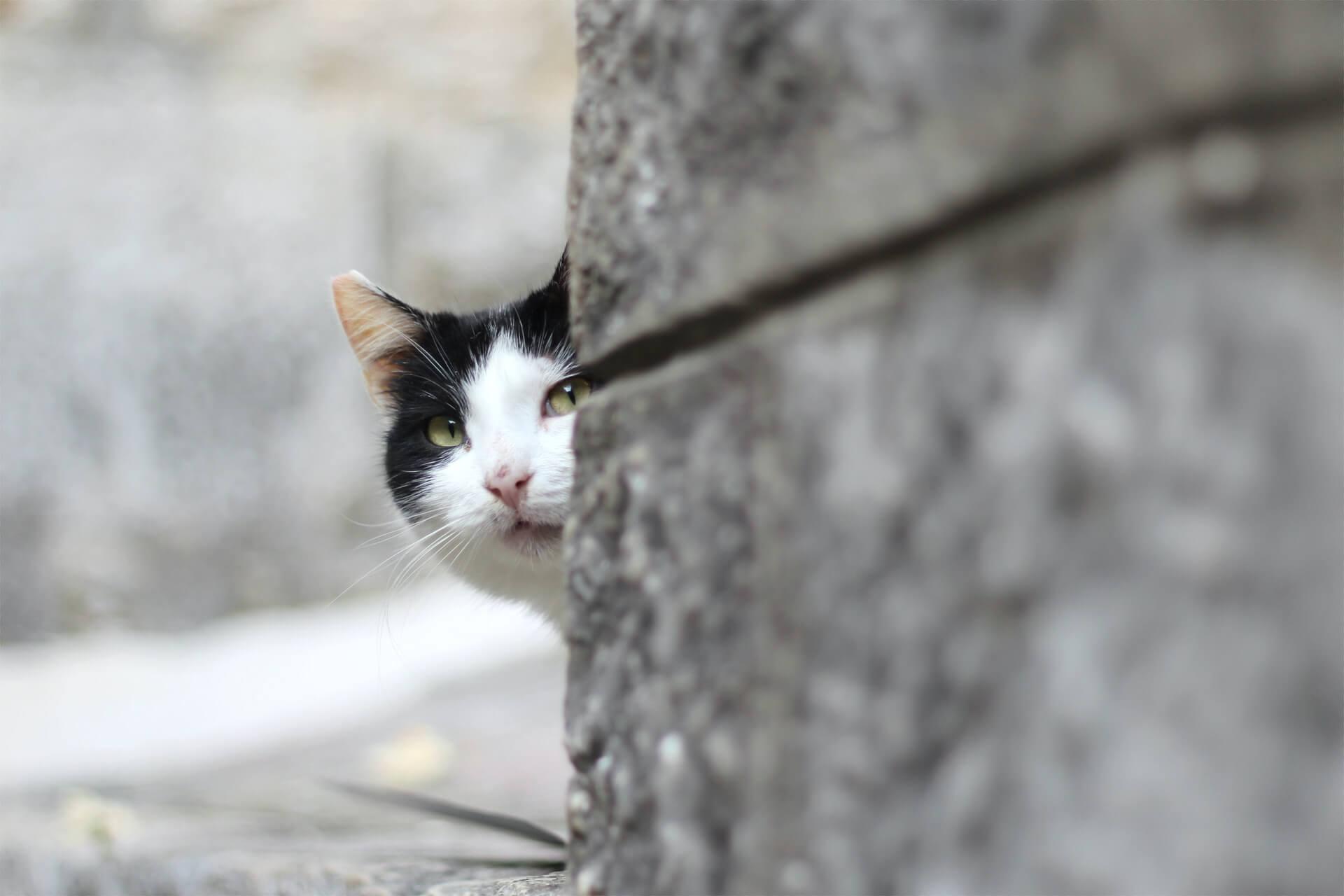 Chat caché derrière un mur