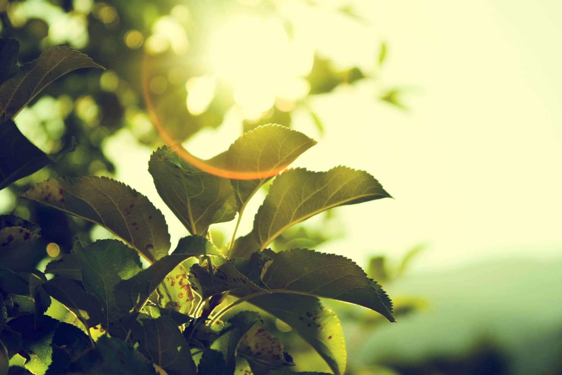 Végétation au soleil - Photo by Micah Hallahan on Unsplash